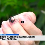 Love Bugs! Watch a News 6 Interview of Denise DeBusk on Those Pesky Couples