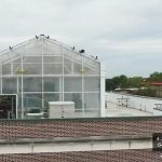 Channel 9 Features our Rooftop Greenhouse and Sustainable Growing